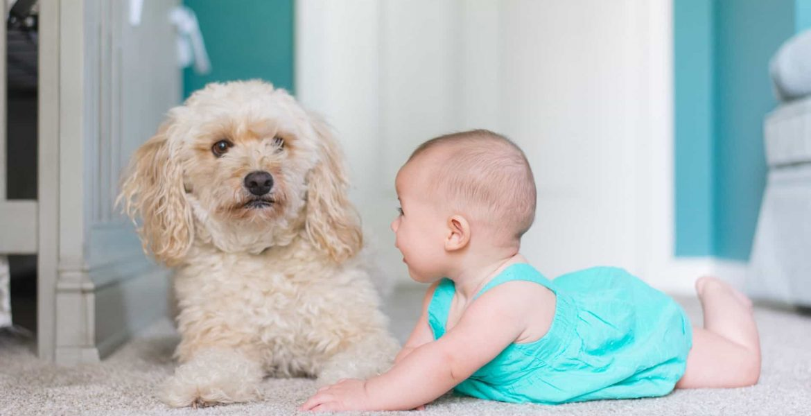a baby and a dog on clean carpet | Quality Counts Carpet