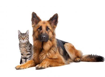 A dog and a cat sitting next to each other on the floor | Quality Counts Carpet